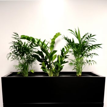 Black planter box